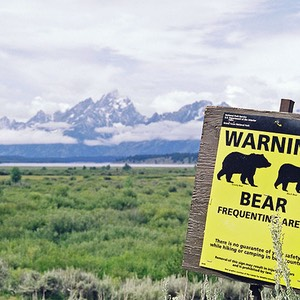 Bear Frequenting Area, Grand Teton National Park