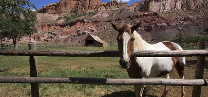 Capitol Reef, Horse at Gifford Homestead