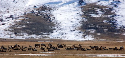Day 3: National Elk Refuge, Jackson, Wyoming