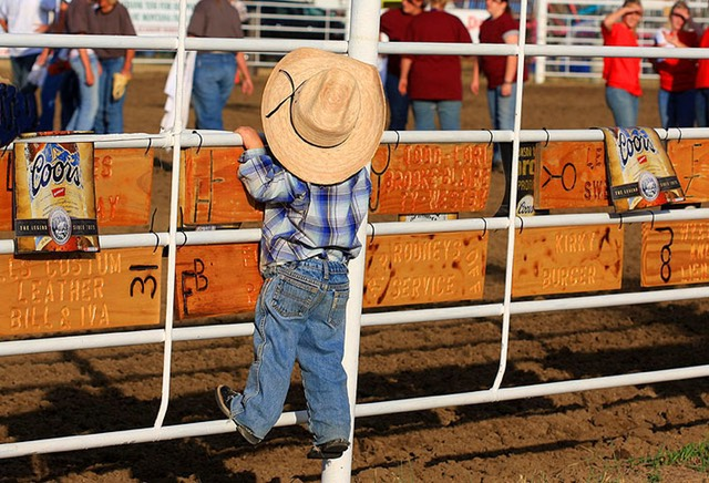 Junior Cowboy At Glasgow Rodeo American Road Trips
